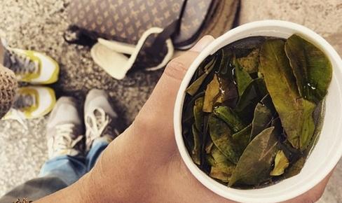 Ксения Собчак жует листья коки