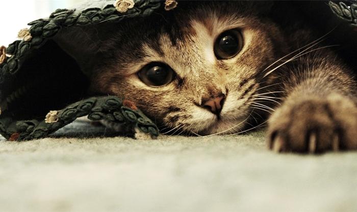 7 вопросов-ответов о кошках и котах
